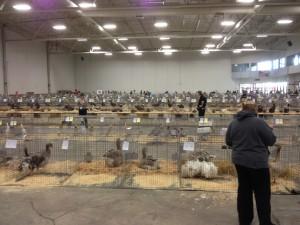 Fowl Fest 2013
